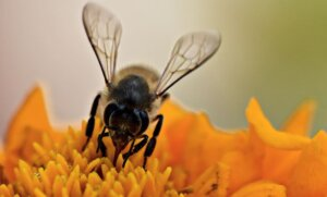 háziméh